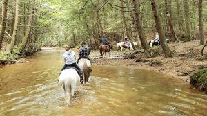 Cook Forest Area Scenic Trailride